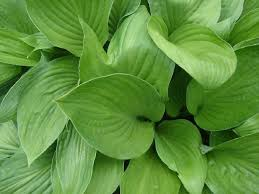 green plants yip green plant plant green leaf plant