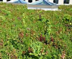 liveroof green roof creates rooftop garden on the nicholas
