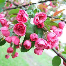 The Most Fragrant Plants - the best fragrant flowers for your garden gardens trees and scarlet