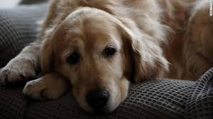 the loss of a pet how to deal with the loss of a pet cnn