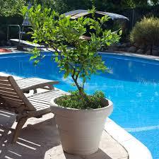 crescent garden round resin madison planter hayneedle