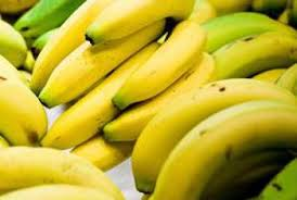 Judge A Tree By Its Fruit - how to know when bananas on a tree are ripe home guides sf gate