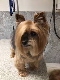 Dog Mom Meme - this dog showed up to petsmart and asked to speak to the manager