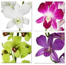 dendrobium orchid fresh cut orchid assortment dendrobium variety me pack