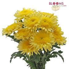Picture Of Mums The Flowers - wholesale mums u0026 spider mums u2013 bloomsbythebox com