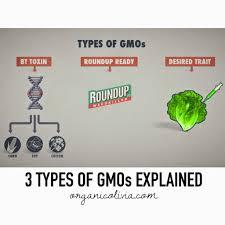 3 types of gmos u0026 dangers explained organic olivia organic olivia