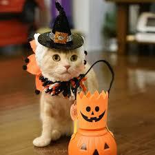 funny halloween backgrounds wallpaper cave halloween kitten