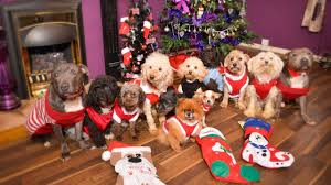 12 dogs of christmas youtube