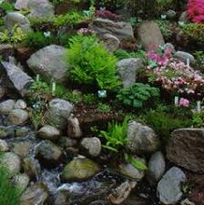 Rock Garden Plant The Miracle Of Rock Garden Plants For