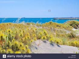 native plants australia sandy coastal dunes with native plants and the turquoise indian