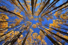 looking up boreas pass breckenridge colorado nate zeman