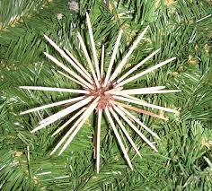 set of 12 sweet gum tree toothpick tree