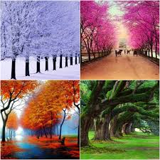 22 best all four seasons images on pinterest four seasons