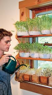 Winter Indoor Garden - a simple way to grow fresh greens indoors this winter chelsea