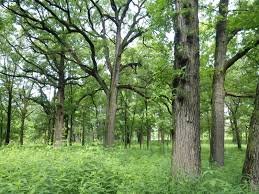 Prairies forest preserves of cook county