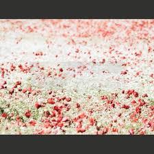 imagenes libres para publicidad mejores 16 imágenes de imagenes de flores y plantas en pinterest