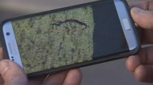scottsdale firefighters remove relocate gila monster arizona u0027s