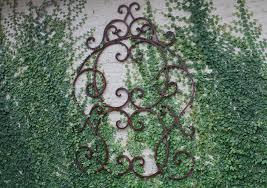 creeping fig on trellis u0026 wall grumbles house antiques u0026 garden shop