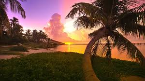 palm tree wallpapers 6869392