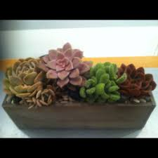 miami flower delivery succulents flower delivery in miami perak florist
