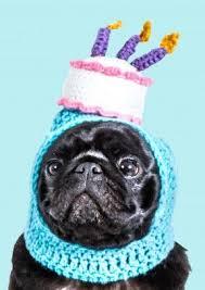 Birthday Pug Meme - birthday clipart pug pencil and in color birthday clipart pug