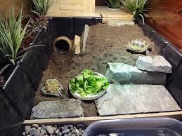 Tortoise Bedding New Tortoise Table For Russian Tortoise Youtube