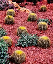 garden ideas images 34 sharp cactus garden ideas
