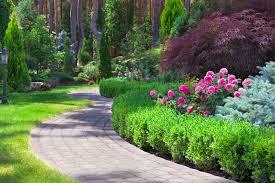 English Box Topiary - english box hello hello plants u0026 garden supplies