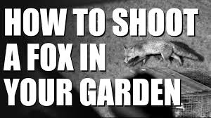 how to shoot a fox in your garden youtube