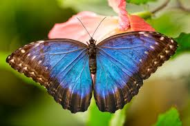 the butterfly effect personal cycles of transformation rebirth