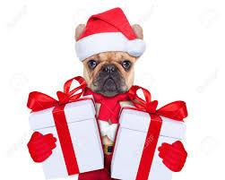 dog christmas dog christmas stock photos royalty free business images