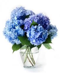 Violet Vase Blue Hydrangea Vase