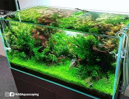 Planted Aquarium Aquascaping Ada 120p With Solar Rgb Of Ada Booth At Cips Exhibition In