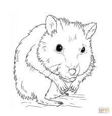 hamster coloring pages dwarf hamster coloring pages