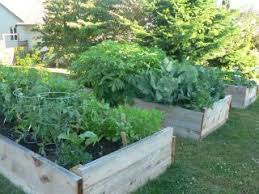 raised bed vegetable gardening learn the advantages of growing