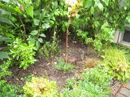 portland native plant list chickadee gardens september 2013