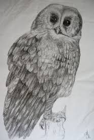 Owl Lovers by 367 Best Owl Sketches Images On Pinterest Owls Sketching And
