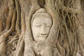 of sandstone buddha in the bodhi tree roots at mahathat