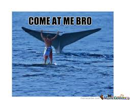 Whale Meme - whale memes best collection of funny whale pictures