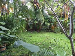 malaysian backyard permaculture three roods farm