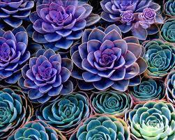 succulent facts succulents cat friendly plants arrangement ideas for inspiration