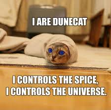 Funny Meme Cat - cat memes happy birthday cat memes funny cat memes pictures