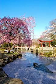 japanese cherry blossom garden wallpaper http refreshrose