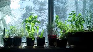 Window Sill Herb Garden Designs Window Sill Herb Garden Mywellness Network