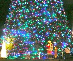 the 100 foot tree in delray fl it s on