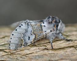 garden moth scheme lazy to