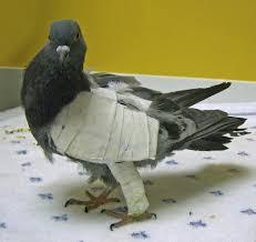 hola como puedo hacer unas alas de pato para nia de 4 mis amigas las palomas tratamiento ala rota