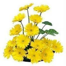 flower images send flowers to delhi delhi online florist florist in delhi