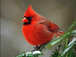 Nj Backyard Birds by Learn To Identify Your Backyard Birds Bernardsville Nj Patch