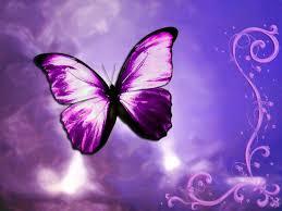 butterfly butterfly irene purple butterflies free
